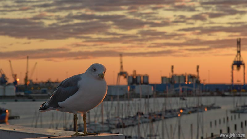 Dawn at Sète with a seagull
