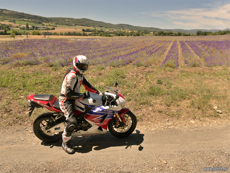 Lavender fields in the Lubéron