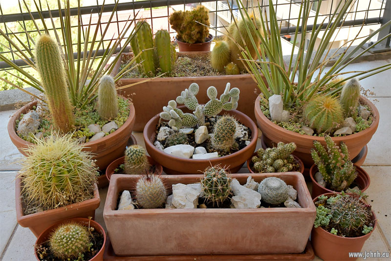 My cactus garden in Marseille